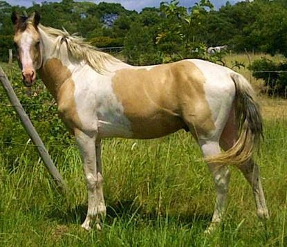 My stallion Sioux Pa Stunning