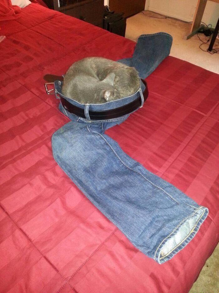 If it's fits, I sits