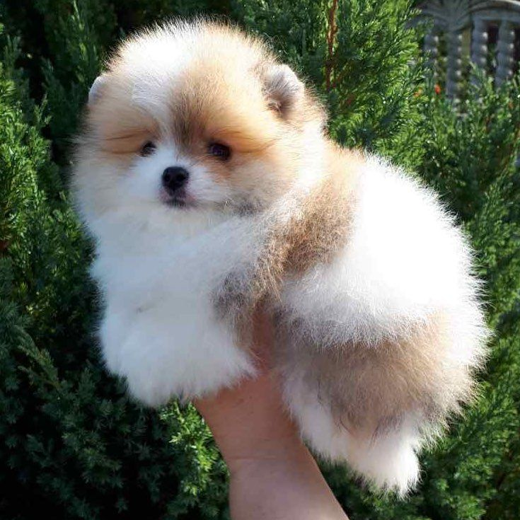 Pup so fluffeehhhhh!!!