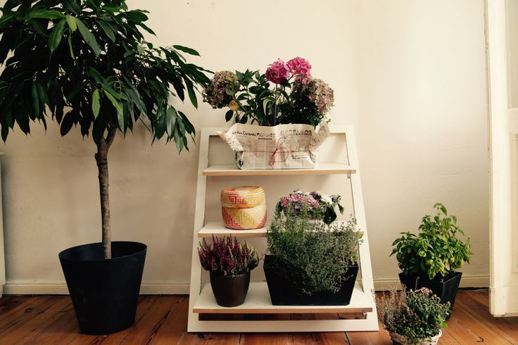 7 best fl pps leaning shelf the plant rescuer images on pinterest leaning shelf plant and. Black Bedroom Furniture Sets. Home Design Ideas