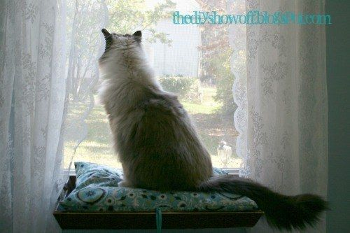 Make a window perch for your cat to see what's going on outside. | 27 Brilliant Hacks Every Cat Owner Needs To Know