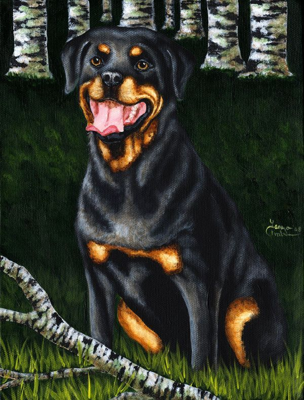 What is the average weight of a german rottweiler