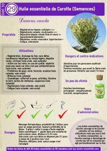 L'huile essentielle de Carotte