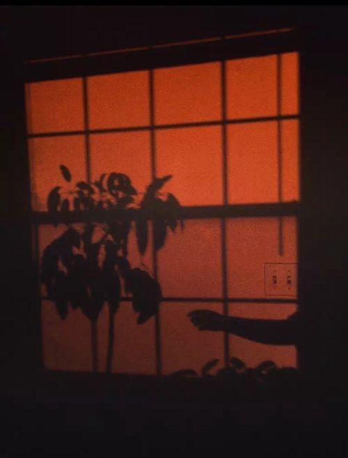 aesthetic, arm, and orange image
