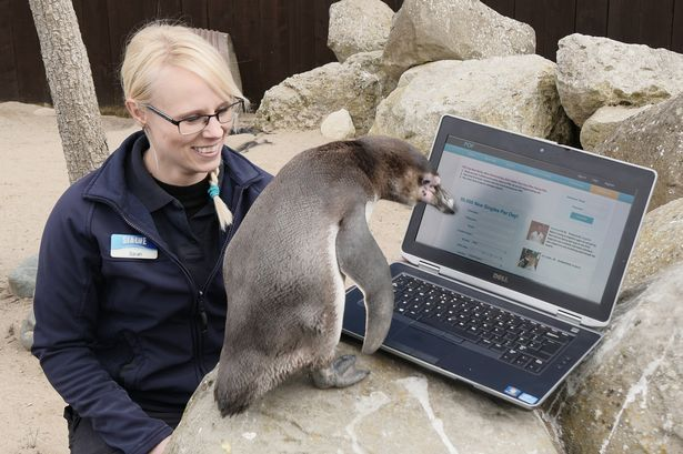 Penguin joins Plenty of Fish dating site in attempt to p-p-pick up a partner 'to have little chicks with' - Mirror Online