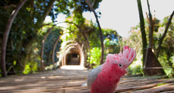 Day Trips: Birds of Eden in #plett. Perfect place for a family outing