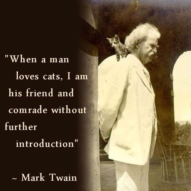 Mark Twain on cats. Quotes for 50+ Kat Morris Realtor Your Property Matters LLC