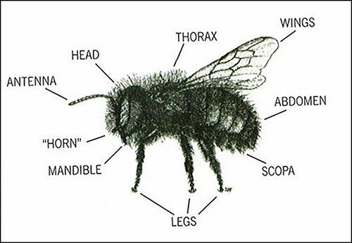Bee Heads Of Diagrams Diy Wiring Diagrams