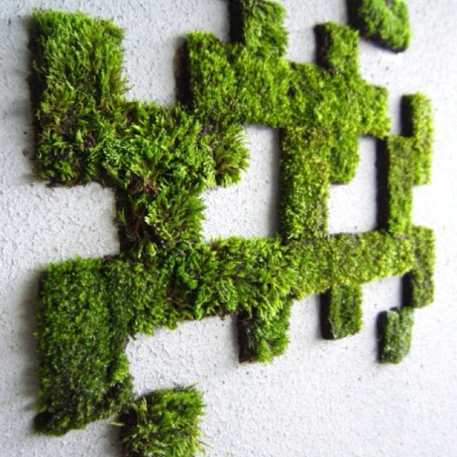 DIY moss   Moss wall art, Moss graffiti, Moss art