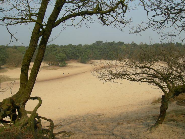 Loonse-en-Drunense Duinen (the Netherlands). Brings back childhood memories!