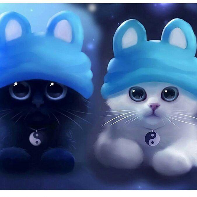 Black Kitten Cute Hd Wallpaper 1080p Kitten Wallpaper Cat Wallpaper Cat Photography
