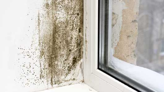 The key to mold prevention is simple: moisture control. Here are nine ways to curb moisture indoors, and the mold that thrives on it.