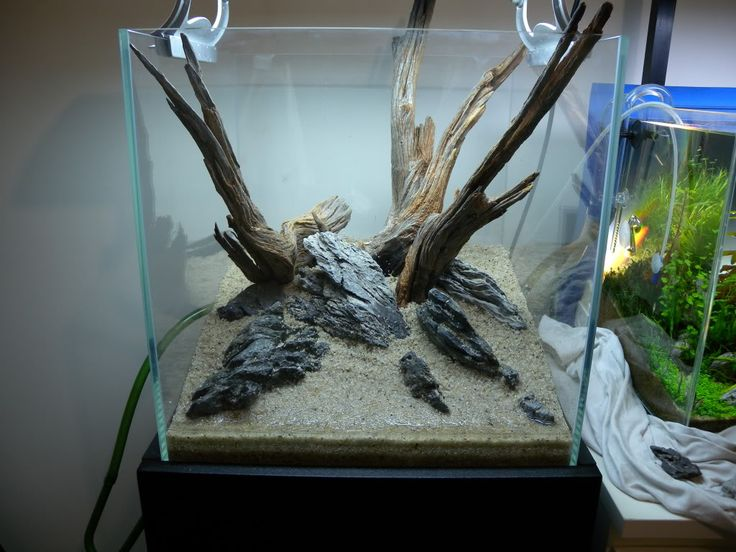 29 best images about cichlid tank scape on pinterest for Driftwood for fish tank