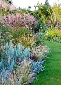 Ornamental grass border where grasses in different sizes are perfectly combined with Artemisia ludoviciana 'Silver Queen', Carex grayi, Helichrysum petiolare, Miscanthus sinensis, Pennisetum setaceum 'Rubrum' and Verbena bonariensis