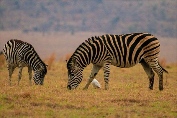 We are offering cheap #flights to #SouthAfrica. Hurry up, #book your #tickets with us and keep enjoying #famous #places of #Africa.