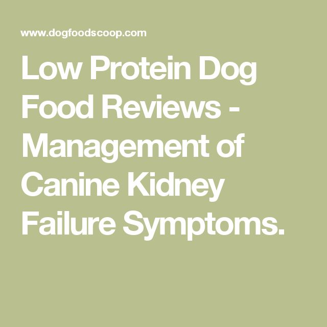 Low Protein Dog Food Reviews - Management of Canine Kidney Failure Symptoms.