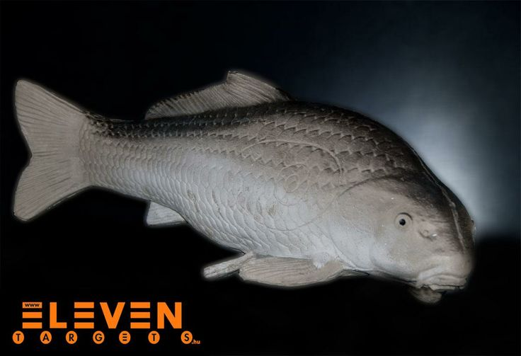 #Eleven 3D Carp. #IFAA category: 4. #Eleven 3D Nyurga Ponty. #IFAA kategória: 4.  #archery #target  http://eleventargets.hu/index.php?action=showpic&fid=586