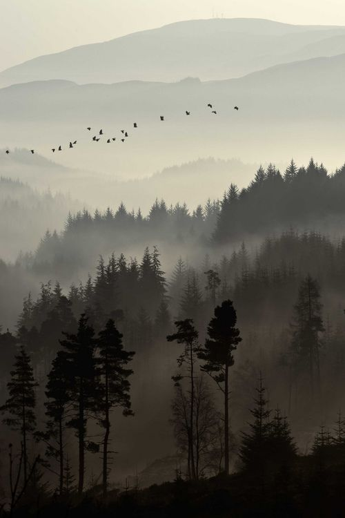 Beautiful misty morning. [Dukes Pass, Trossachs {Scotland} by David Mould, via 500px]