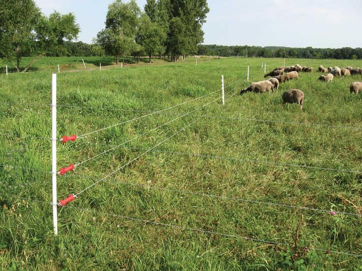 electric fencing basics