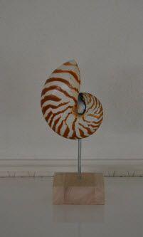 Nautilus schelp op voet. Gewoon mooi in elk huis om neer te zetten.