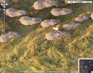 elephants on google maps satellite