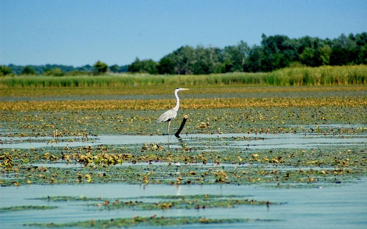 Lake Tisza has a very rich wildlife and vegetation. Thousands of birds fishing around and water flowers blooming all summer long.