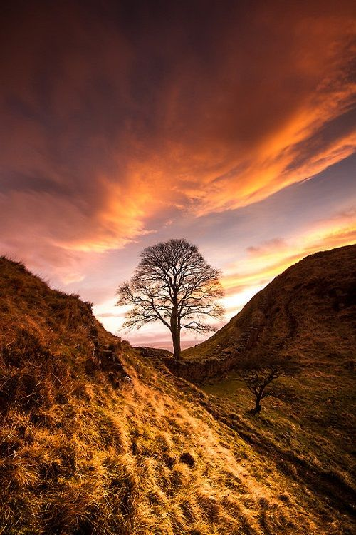 A truly romantic Northumberland spot - Sycamore Gap - as seen in the all time schmaltzy movie Robin Hood Prince of Thieves.