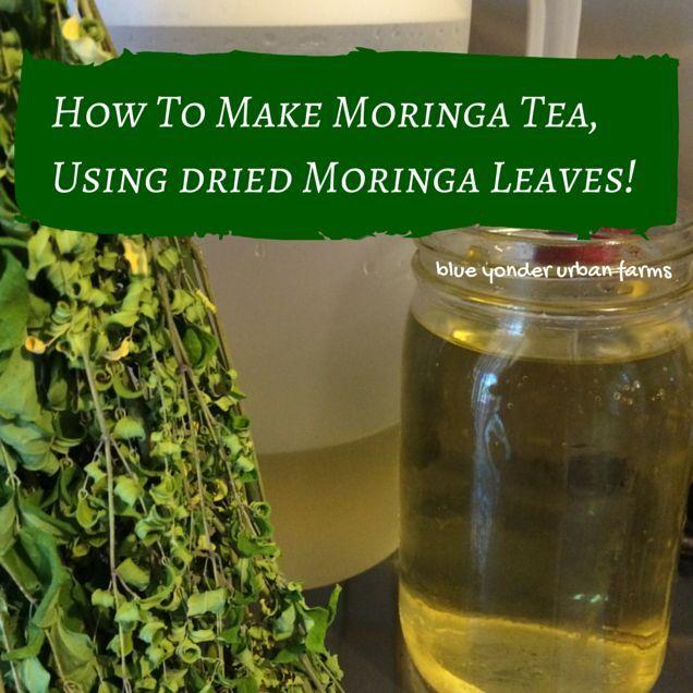 How To Make Moringa Tea, Using Dried Moringa Leaves! | http://blueyonderurbanfarms.com/7089/how-to-make-moringa-tea-using-dried-moringa-leaves | Blue Yonder Urban Farms | by Karen Coghlan | #byuf #blueyonderurbanfarms #karencoghlan