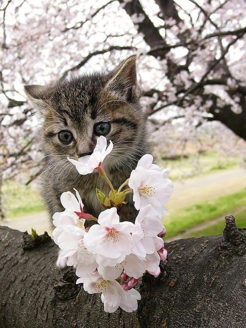 Springtime kitten