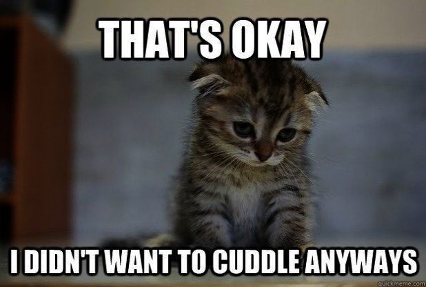 Look what I pinned > Cute Cats Photos Tumblr #visit   Cute
