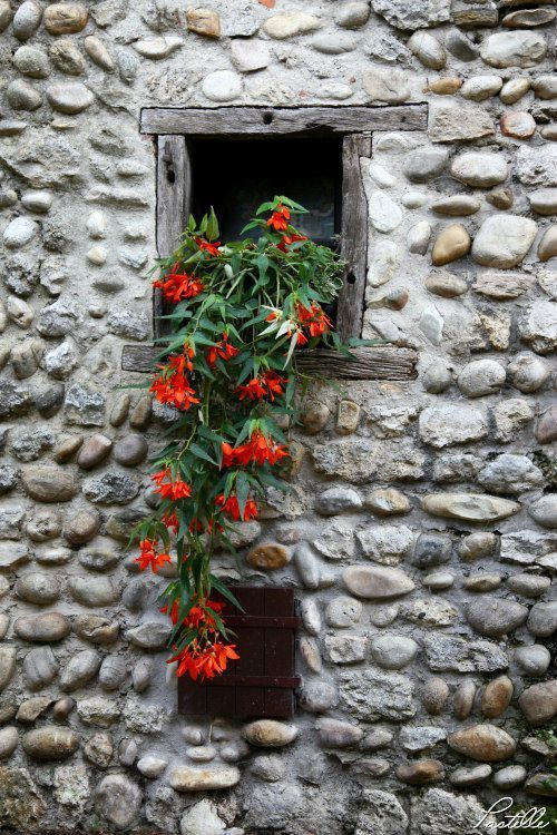 stone window with red floral tumble (lejardindutemps)