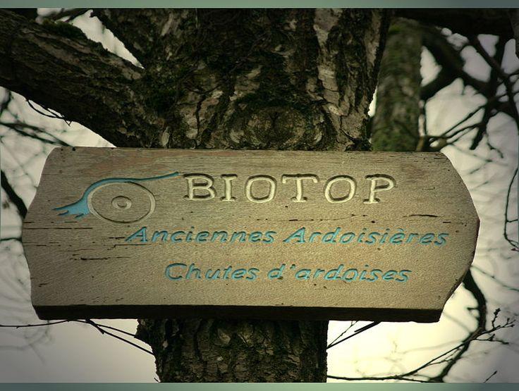 File:Biotop Aasselbur.jpg