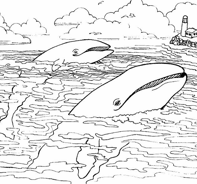 nims island coloring pages - photo#9