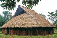 En la maloca viven varias familias pertenecientes a un mismo linaje. Son enormes construcciones donde se llevan a cabo todas las actividades...