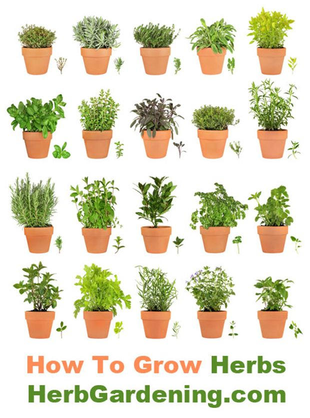 Learn How To Grow Your Own Herb Garden Indoors or Out!- http://www.mcdonnellfeed.com/ has the supplies you need to grow healthy, safe plants.