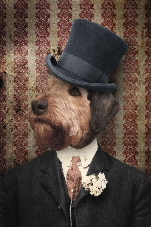 Airedale Terrier Art Animal Photography Dog Artwork Portrait Photography 8x12 Print - Sir Winston