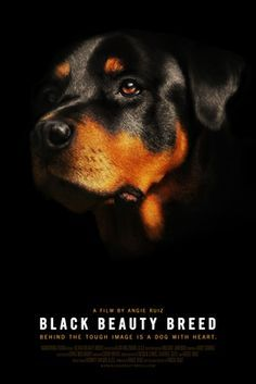 BLACK BEAUTY BREED - FILM ABOUT ROTTWEILERS in CAMBRIDGE, MA July 17, 2014. Sign up!!! Still need more viewers!! Tugg - The movies you want at your local theater