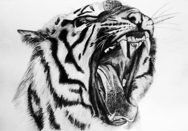 tiger drawing easy - Google Search | painting and drawing ...