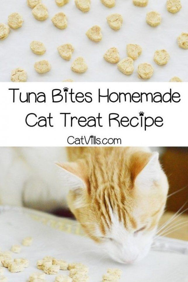 If You Re Looking For An Easy Homemade Cat Treat Recipes For A Sensitive Stomach You Ll Love In 2020 Homemade Cat Treats Recipes Cat Treats Homemade Homemade Cat Food
