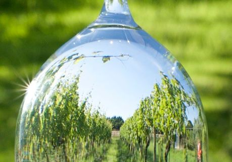 Through a glass. July 2014. We're partway through topping the vines at Oatley, Somerset, UK. Photo by Liz Awty