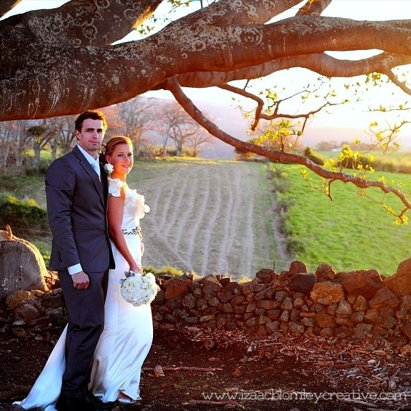 golden hour wedding photo under a large fig tree onto farm land