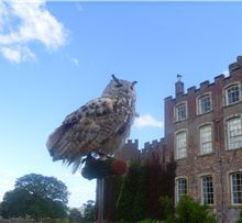 Powderham castle 20 Aug As You Like It