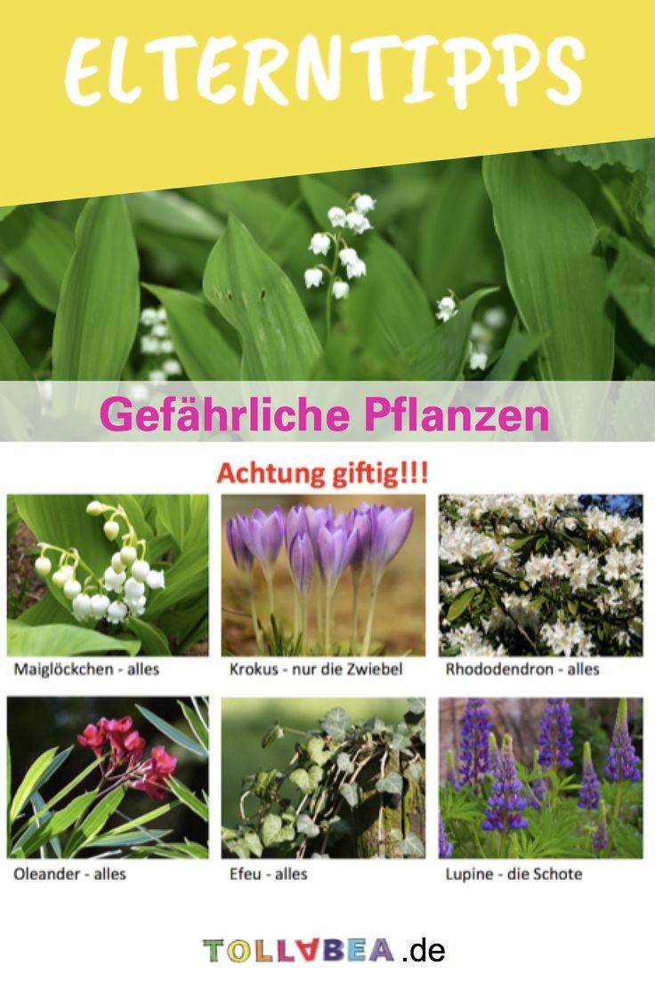best 25 giftige pflanzen ideas on pinterest heilkr uter lexikon kaninchenfutter and. Black Bedroom Furniture Sets. Home Design Ideas