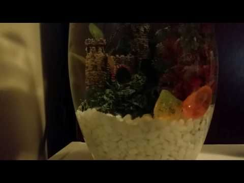 MEET GERALD! Getting a fish!