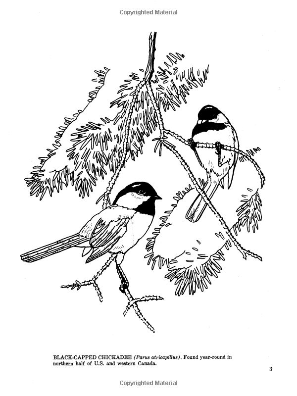 bird coloring pages uk - photo#1