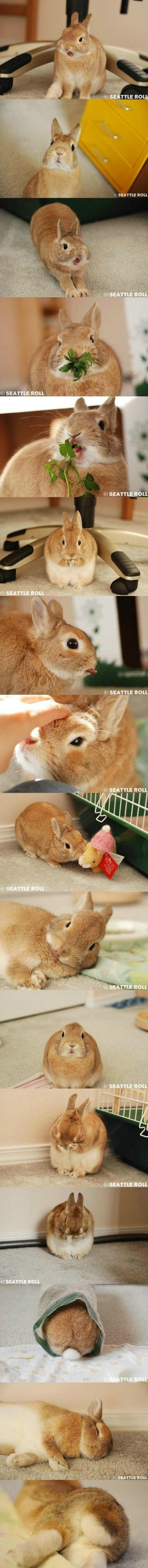 great pics of a bunny and all the cute things it does...