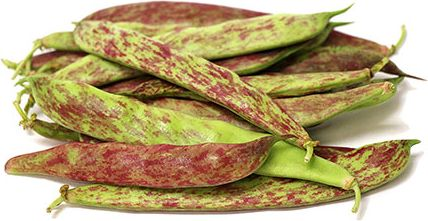Dragon Tongue Beans Information and Facts