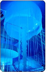 Jellyfish Airstar cover