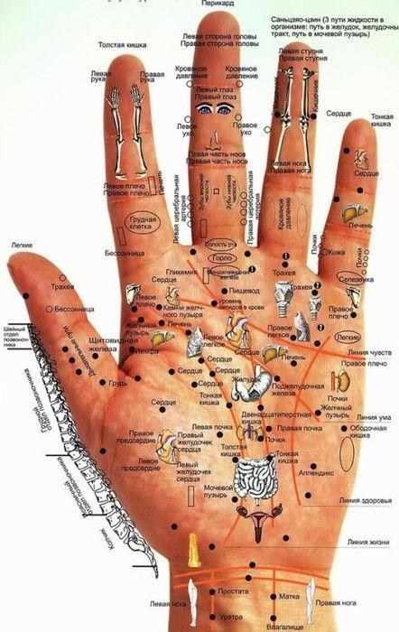 Вот это поворот! Каждый орган тела связан со своей точкой ладони. И вот что это значит для вас! | Узнал сам - расскажи другому.