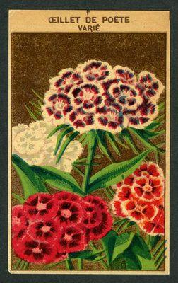 Antique french seed pack label 1920 39 s flower botanical - Oeillets de poete ...